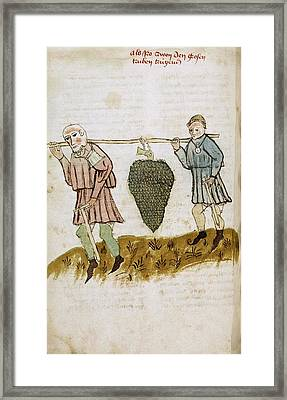 Medieval Farm Workers Framed Print by Renaissance And Medieval Manuscripts Collection/new York Public Library