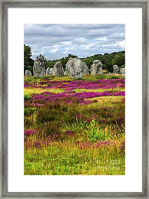 Megalithic Monuments In Brittany Framed Print by Elena Elisseeva