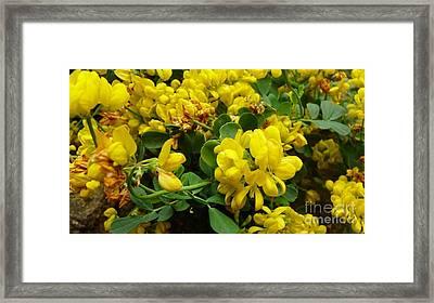 Mellow Yellow Framed Print by Julie Koretz