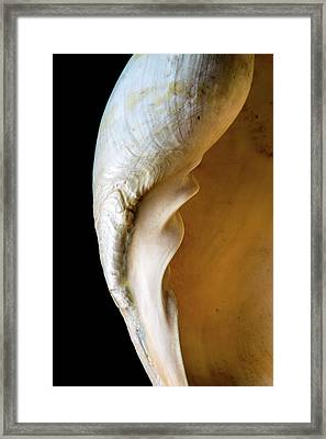 Melo Amphora Framed Print by Natural History Museum, London