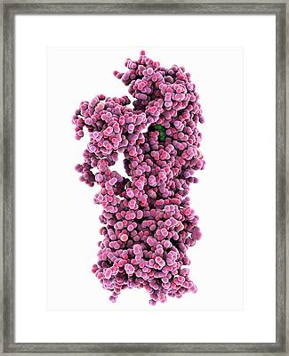 Membrane Proton Pump Framed Print by Laguna Design