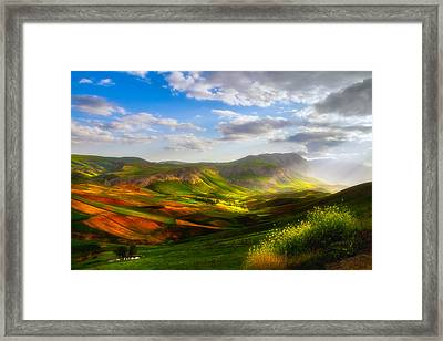 Merciful Fields Framed Print by Niloufar Hoseinzadeh