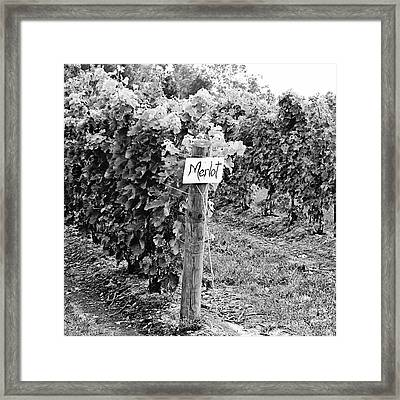 Merlot Framed Print by Scott Pellegrin