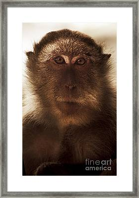 Mesmerised Monkey Framed Print by Jorgo Photography - Wall Art Gallery