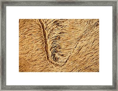 Metalia Sternalis Framed Print by Natural History Museum, London