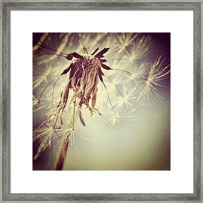 #mgmarts #dandelion #makeawish #wish Framed Print
