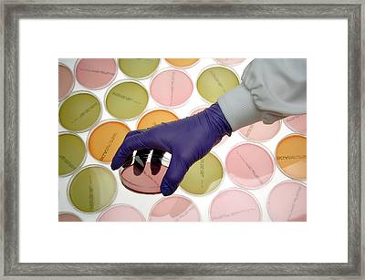 Microbiology Research Framed Print by Public Health England