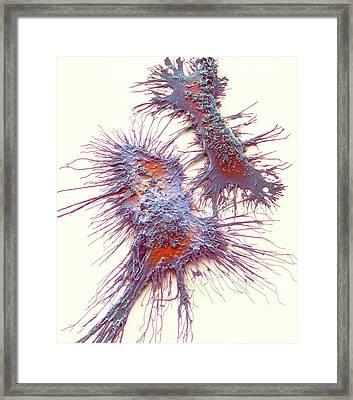 Microglia Framed Print
