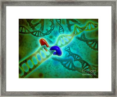 Microscopic View Of Dna Binding Framed Print by Stocktrek Images