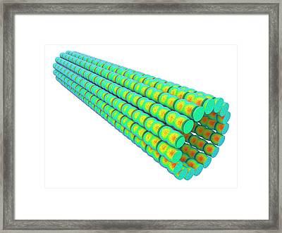 Microtubules Framed Print by Alfred Pasieka/science Photo Library
