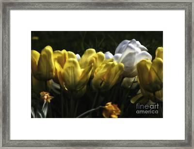 Midnight Tulips Framed Print