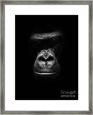 Mighty Gorilla Framed Print