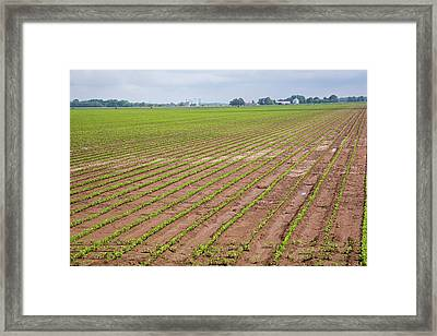 Mississippi Delta Farmland Framed Print by Jim West