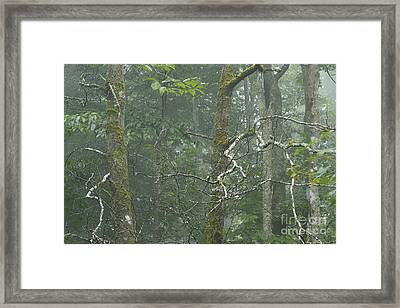 Mist In Cranberry Wilderness Framed Print