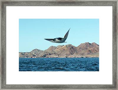 Mobuyla Ray Leaping Framed Print