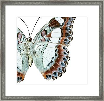 Moduza Nuydai Framed Print by Natural History Museum, London