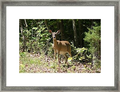 Momma Deer Framed Print
