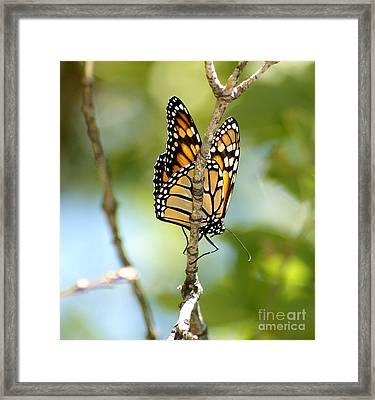 Monarch Framed Print by Lori Tordsen