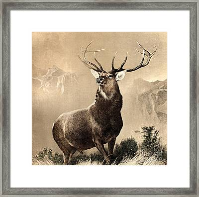 Monarch Of The Glen Framed Print by Celestial Images
