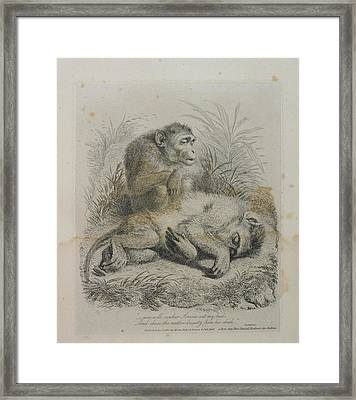 Monkeys Framed Print