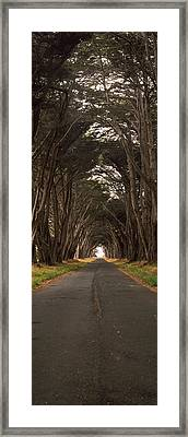 Monterey Cypress Tree Tunnel Framed Print