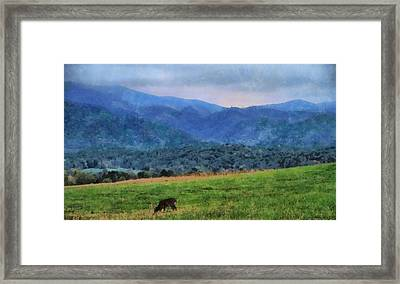 Morning Deer In Cades Cove Framed Print by Dan Sproul