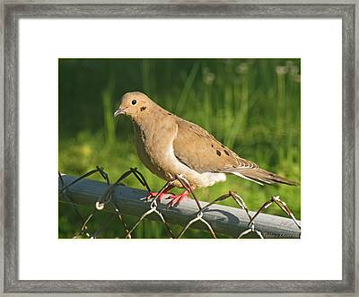 Morning Dove I Framed Print