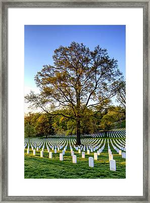 Morning Glory Framed Print by Edward Kreis