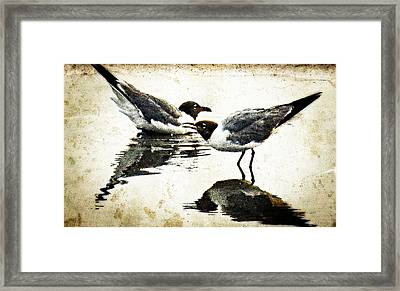 Morning Gulls Seagull Art By Sharon Cummings Framed Print by William Patrick