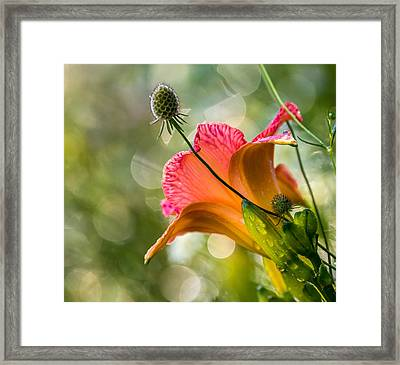 Morning Has Broken Framed Print by Mary Amerman