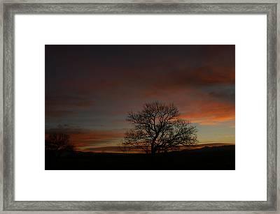 Morning Sky In Bosque Framed Print