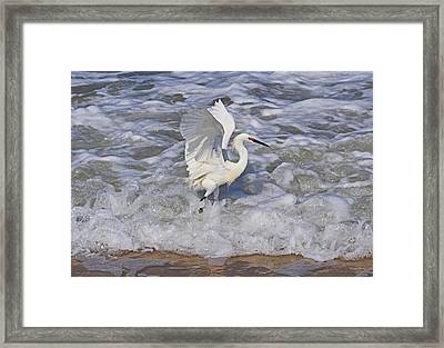 Morning Stretch  Framed Print