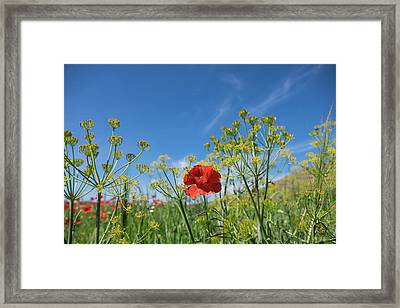 Morocco, Taounate, Spring Flowers Bloom Framed Print by Emily Wilson