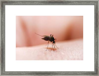 Mosquito Bite Framed Print by Jorgo Photography - Wall Art Gallery