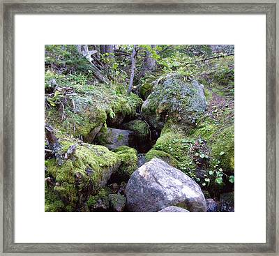 Moss Covered Creek Framed Print