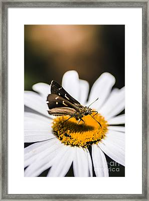 Moth Insects On A Bright And Lush Garden Flower Framed Print