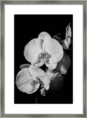 Moth Orchid Bw Framed Print