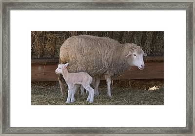 Mother And Child Framed Print by Arthur Warlick