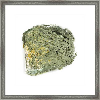 Mould On Bread Framed Print by Science Photo Library