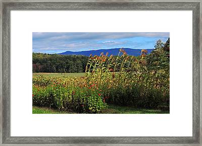 Moultons Field Framed Print by Mim White