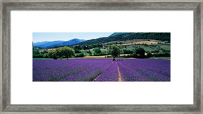 Mountain Behind A Lavender Field Framed Print by Panoramic Images