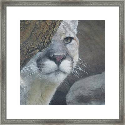 Mountain Lion Painterly Framed Print by Ernie Echols