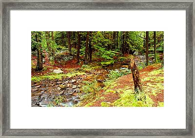 Mountain Stream With Hemlock Tree Stump Framed Print