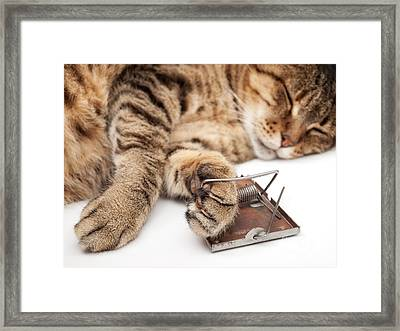 Mouse Nightmare Framed Print