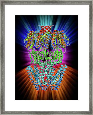 Mscs Ion Channel Protein Structure Framed Print