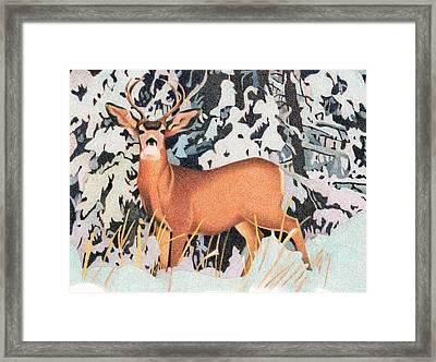 Mule Deer Framed Print by Dan Miller