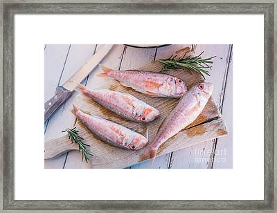 Mullet Fish And Rosemary  Framed Print