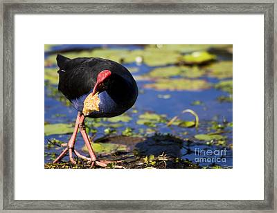 Multigrain Thief Framed Print by Jorgo Photography - Wall Art Gallery