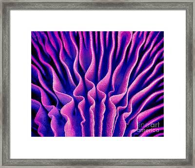 Mushroom Gills, Sem Framed Print by Susumu Nishinaga