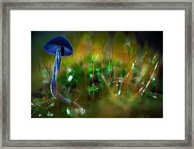 Mushroom Magic Framed Print by Dirk Ercken